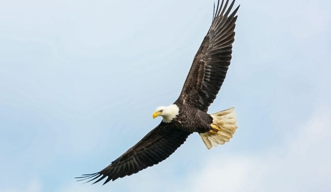 How to Soar on the Wings of Eagles